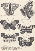 Lepidopterology, 2012.