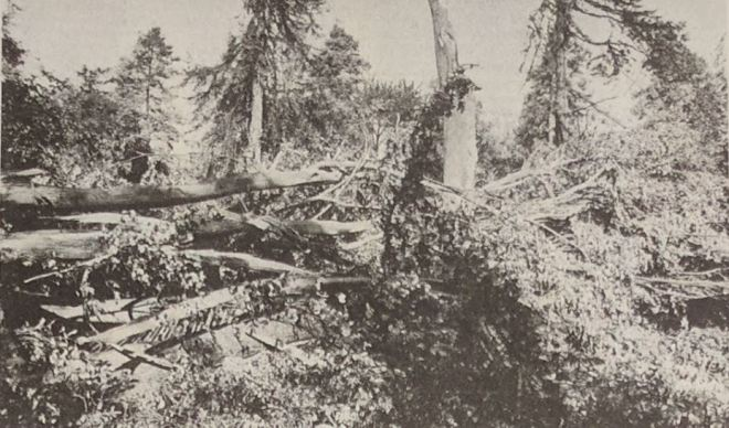 The scene of devastation in Hotham Park, Bognor
